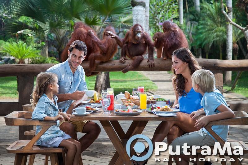 Breakfast with Orang Utan