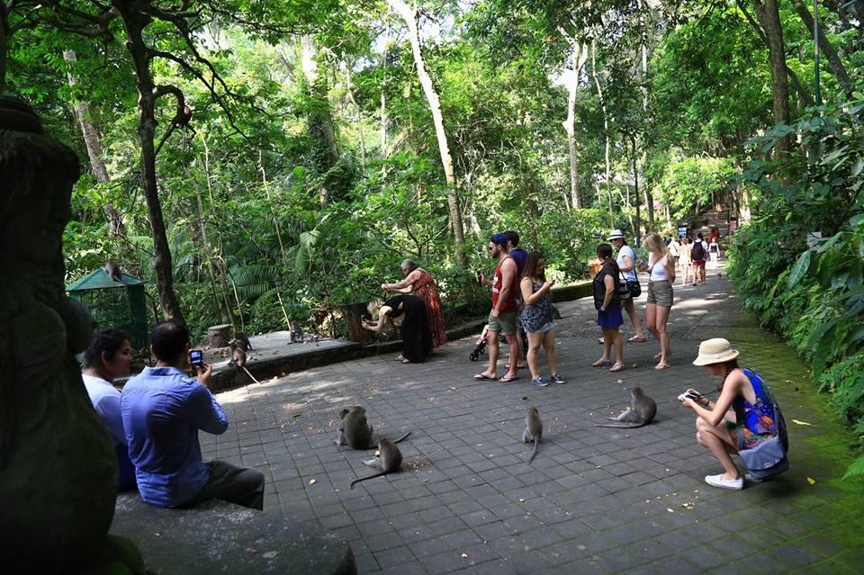 Yuk Jalin Persahabatan dengan Kera Liar di Monkey Forest Ubud, Bali 1
