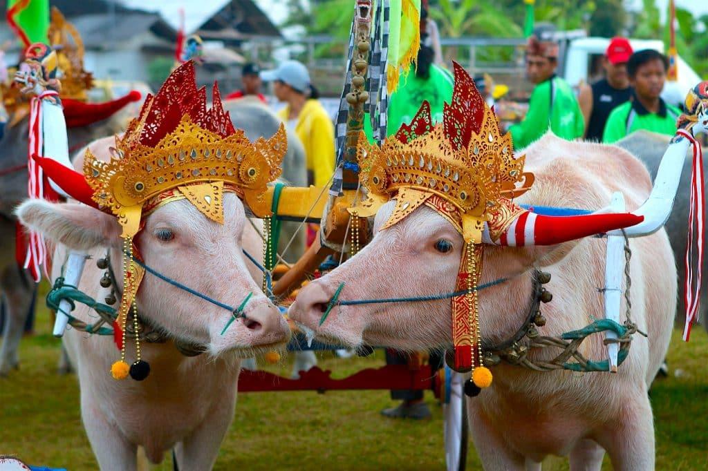 Tidak Hanya Keindahan Tempat Wisata, Tradisi Khas Ini Jadi Daya Tarik Wisata di Bali 1